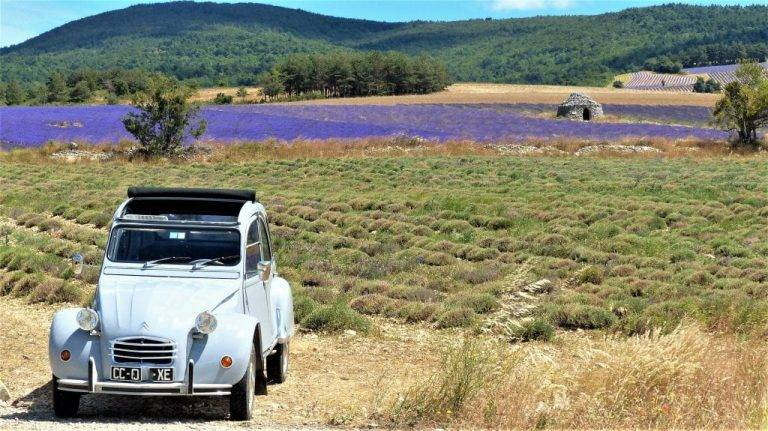 experience provence first lady lavande 1