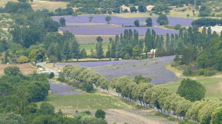paysage-champs-lavande