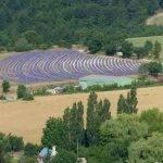 paysage-provencal
